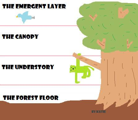 Printables Layers Of The Rainforest Worksheet layers of the rainforest worksheet davezan bloggakuten