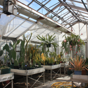 The Cactus & Succulent room of the greenhouse