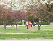 Students walking on campus green